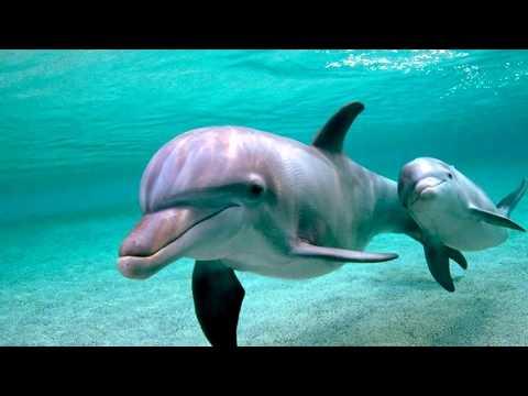 Интересные факты - Дельфины