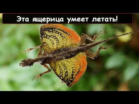 10 самых удивительных ящериц в мире!