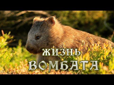 Тайная жизнь Вомбата (1) #Документальный фильм HD