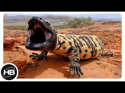 10 Самых Необычных Видов Ящериц в Мире. Интересные факты про ящериц