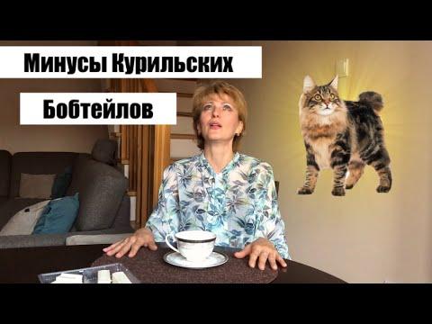 КУРИЛЬСКИЙ БОБТЕЙЛ //СТОИТ ЛИ ЗАВОДИТЬ? // мой опыт