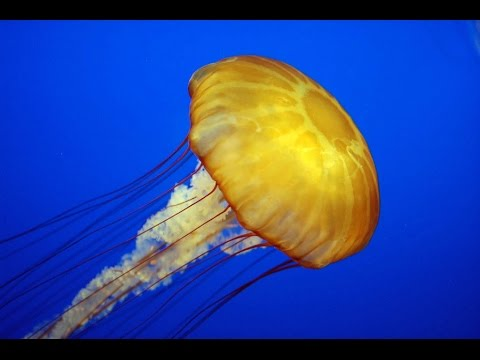 Дикая природа Медузы монстры Документальный фильм National Geographic