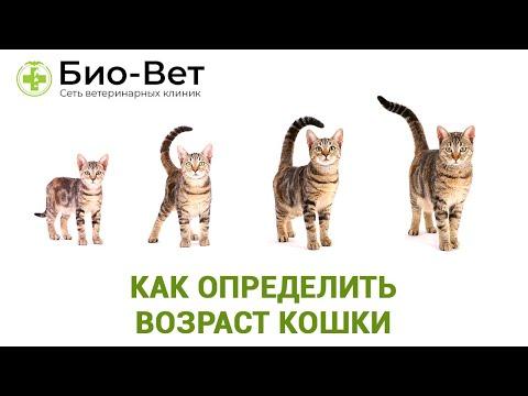Как определить возраст кошки // Сеть Ветклиник Био-Вет