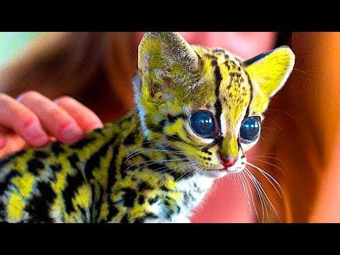 10 Самых Дорогих Котов в Мире