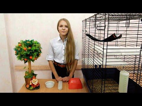 Декоративные крысы - уход и содержание | Домашние крысы - как ухаживать?
