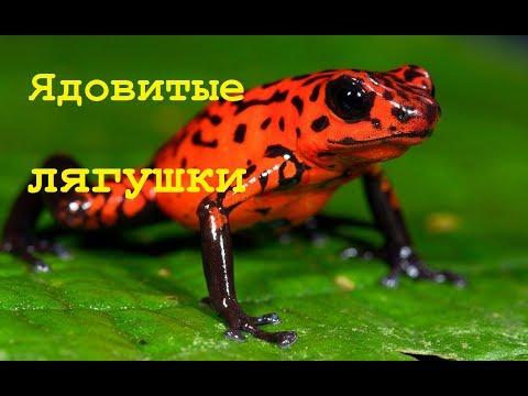 Документальный фильм о животных. ЯДОВИТЫЕ ЛЯГУШКИ. Мир природы. Биология 7 класс