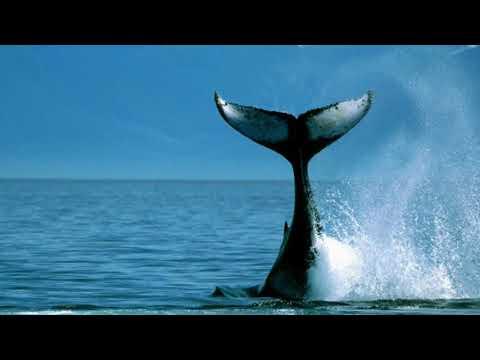 Удивительные факты о китах.