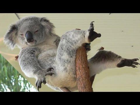 Он вам не медведь! Австралийская мятная подушка или просто КОАЛА!