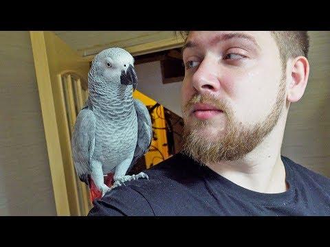 Мой говорящий Попугай Жако