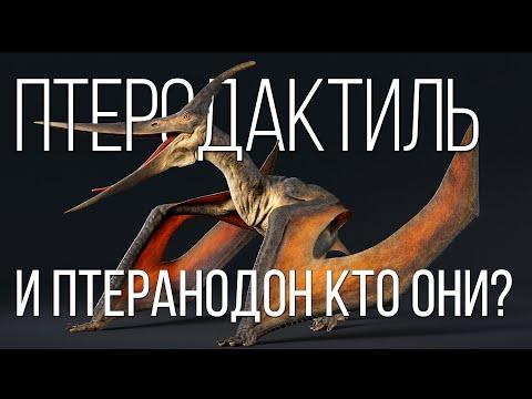 ПТЕРОДАКТИЛЬ: Летающий динозавр размером с ворону   Интересные Факты про динозавров