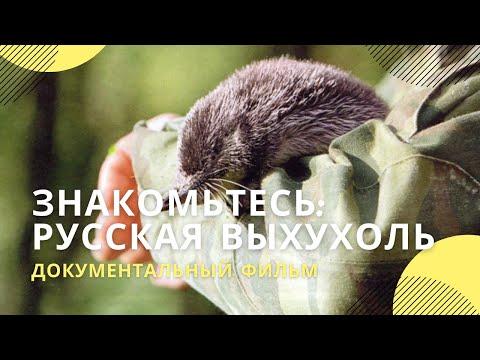 «Знакомьтесь: русская выхухоль»   Документальный фильм