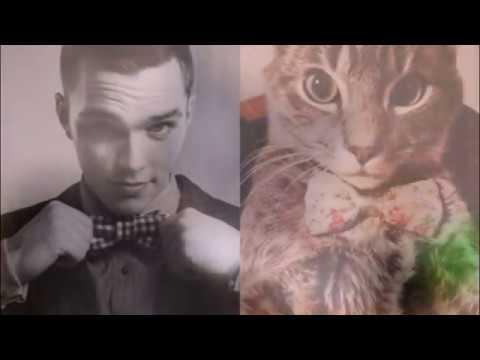 Возраст кошки по человеческим меркам Age of the cat by human standards