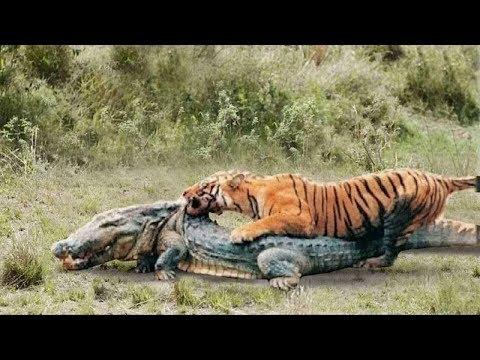 ТИГР В ДЕЛЕ! Тигр против медведя, крокодила, слона, кабана...