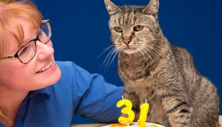 Как продлить жизнь кошек