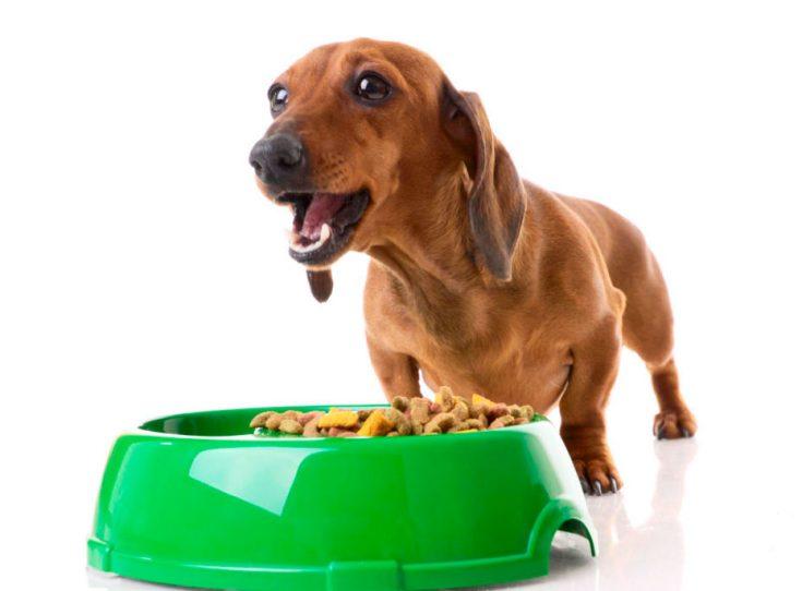 Как правильно кормить взрослую собаку