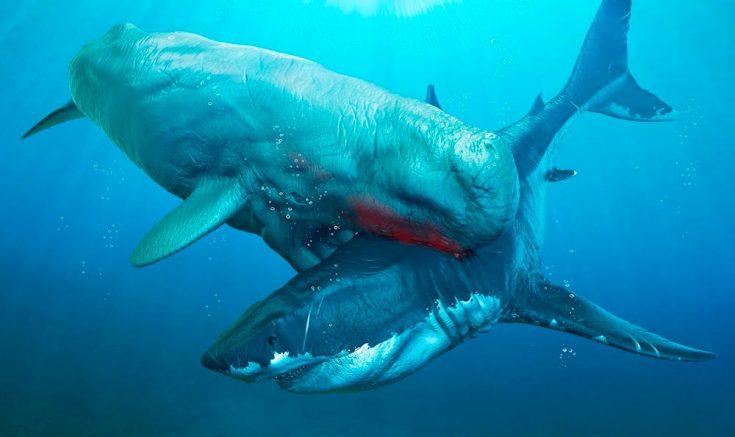 враги акул