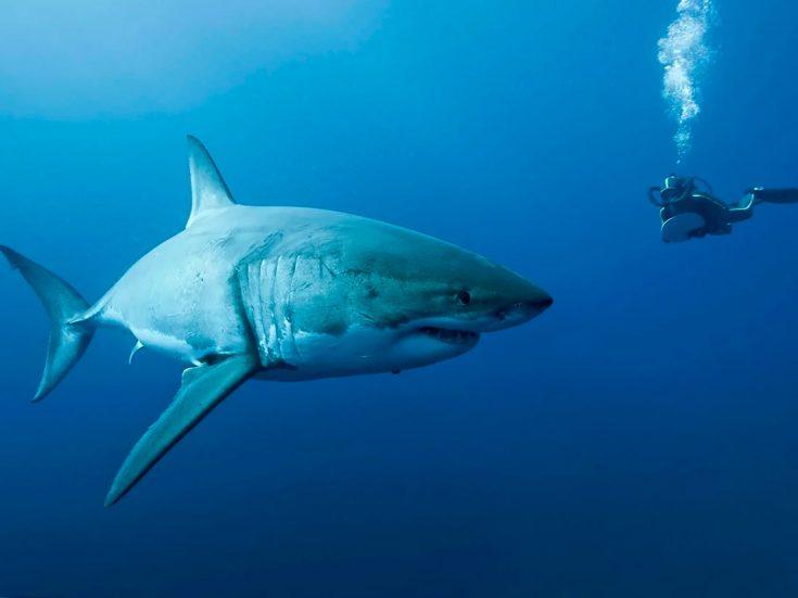 Акулы и человек