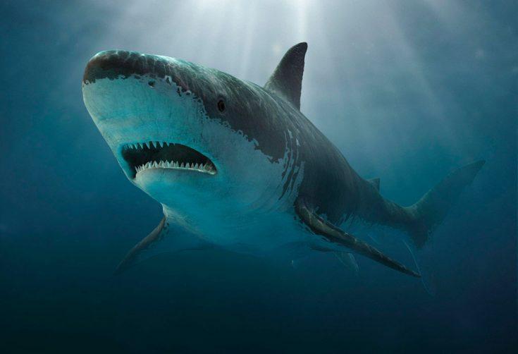 Акулы в культуре