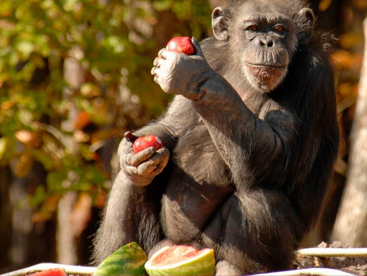 Рацион питания обезьян