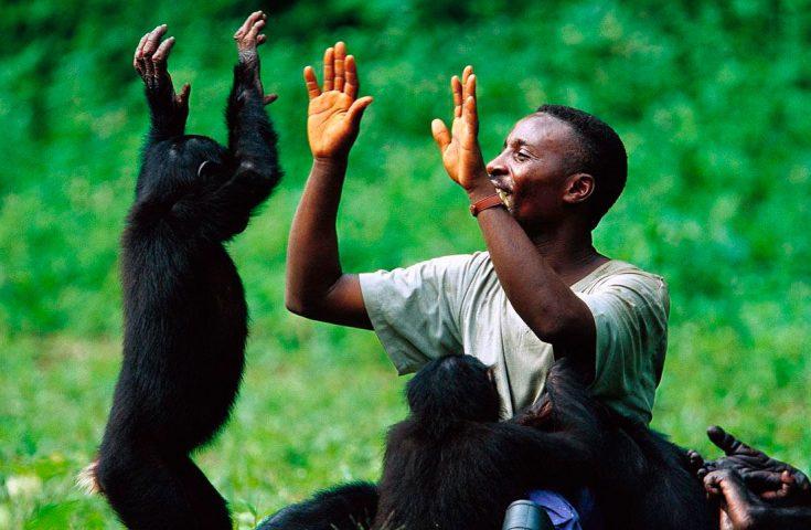 обезьяны и человек