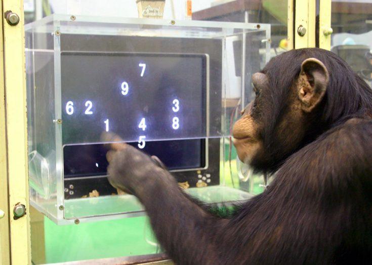 Интеллект обезьян