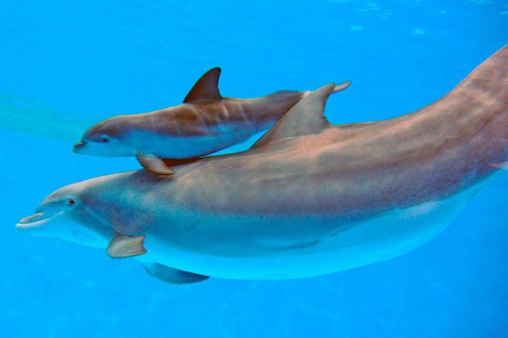 Размножение дельфинов