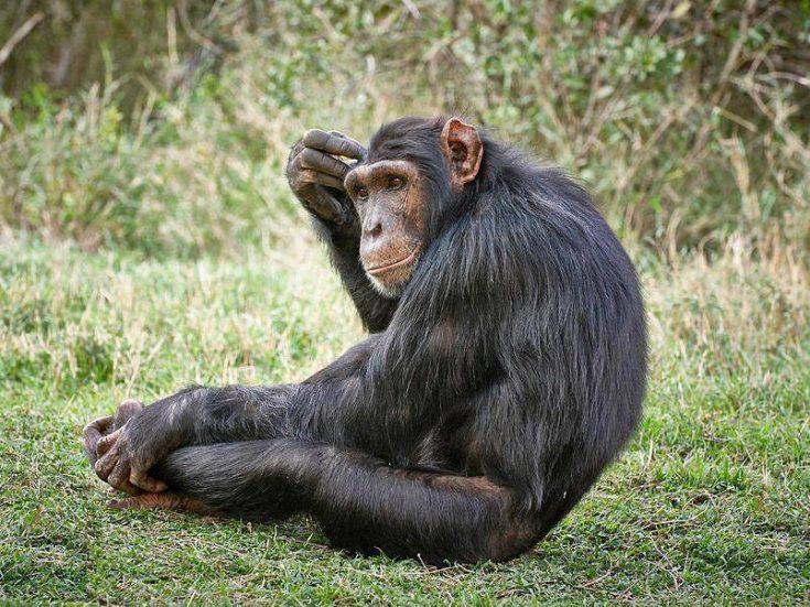 Сколько живут обезьяны