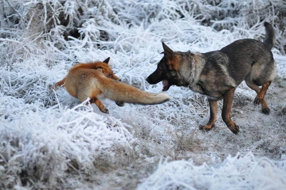 мира картинки собаки враги расположен непосредственной близости