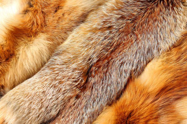 Ценность меха лисы