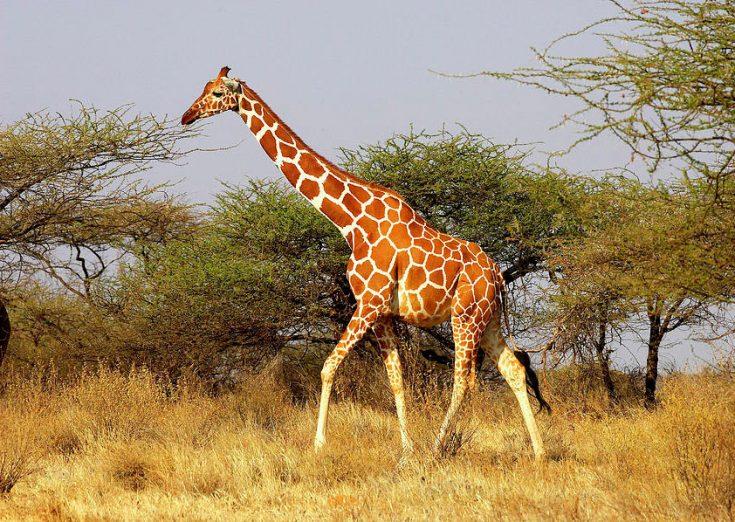 Природные места обитания