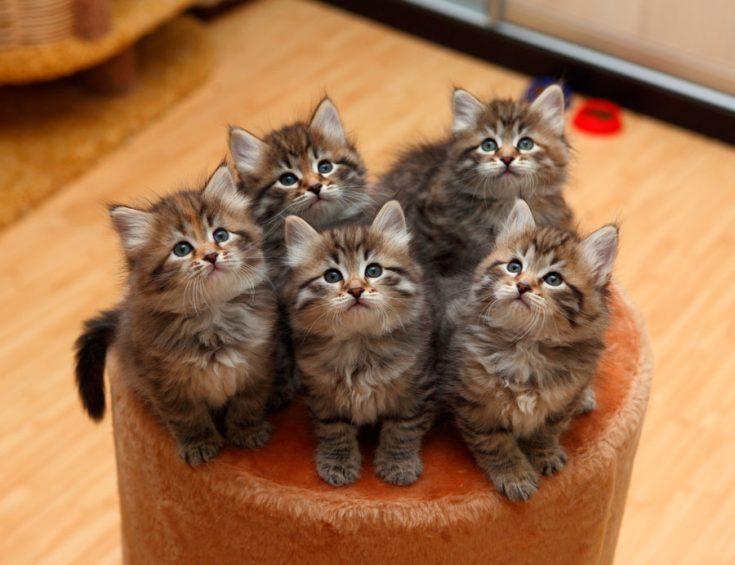 Советы и рекомендации по покупке котенка