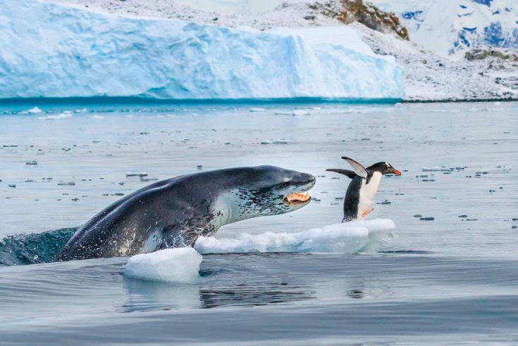 враги пингвинов