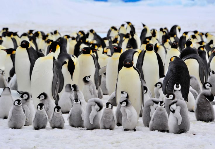 Популяция и статус вида