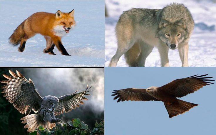 Природные враги