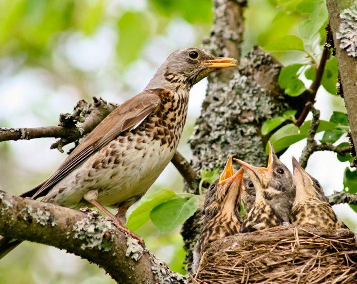Размножение и потомство