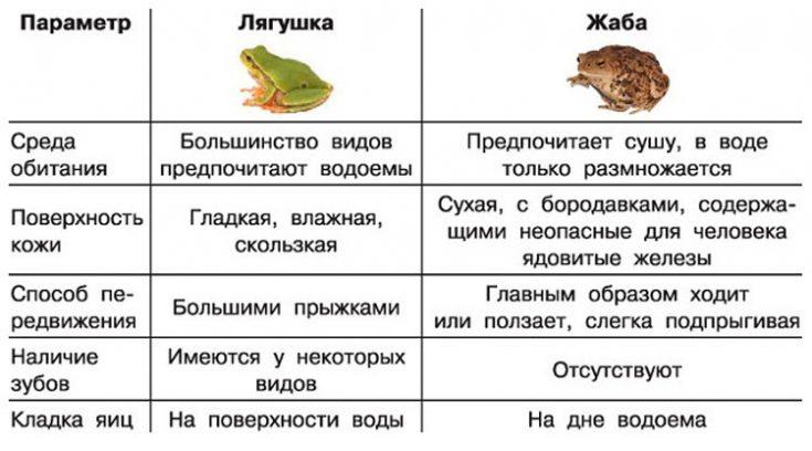 Различия лягушки и жабы