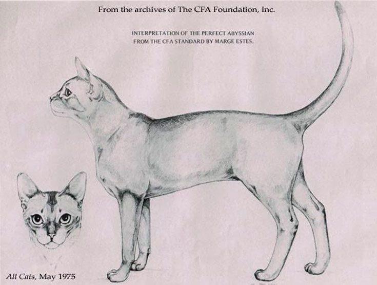 Стандарты CFA