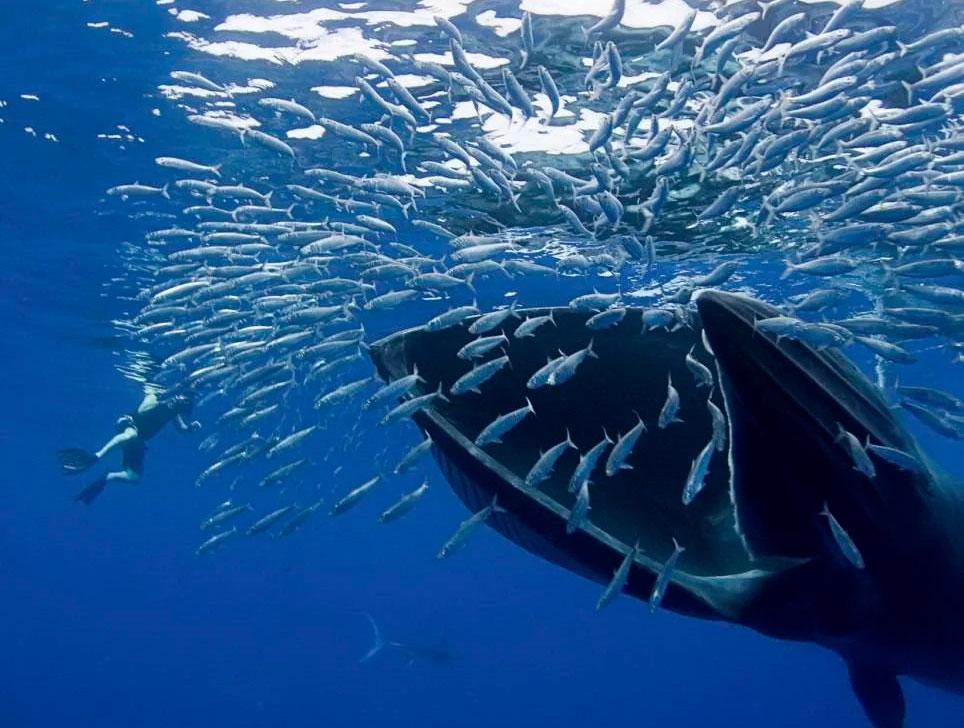 долгое время фото крили которой питается кит продукт мне