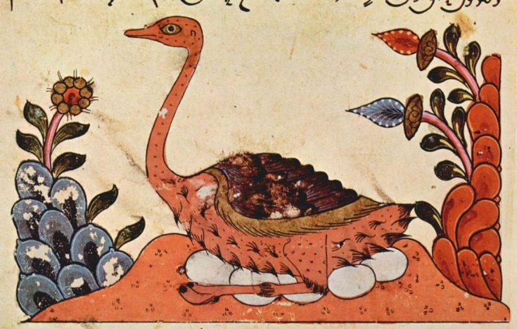 Сирийский страус